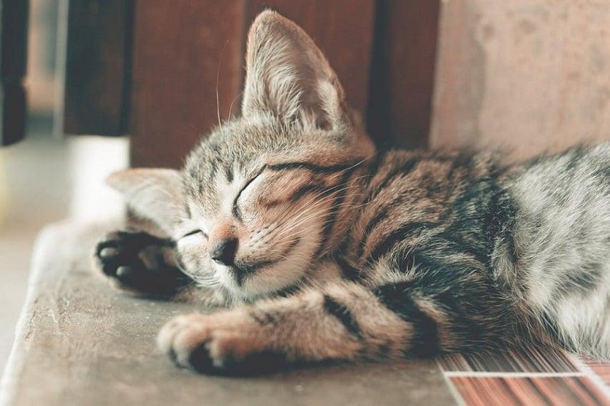 גור חתולים קטן וחמוד מנמנם על הרצפה בלי הפרעות