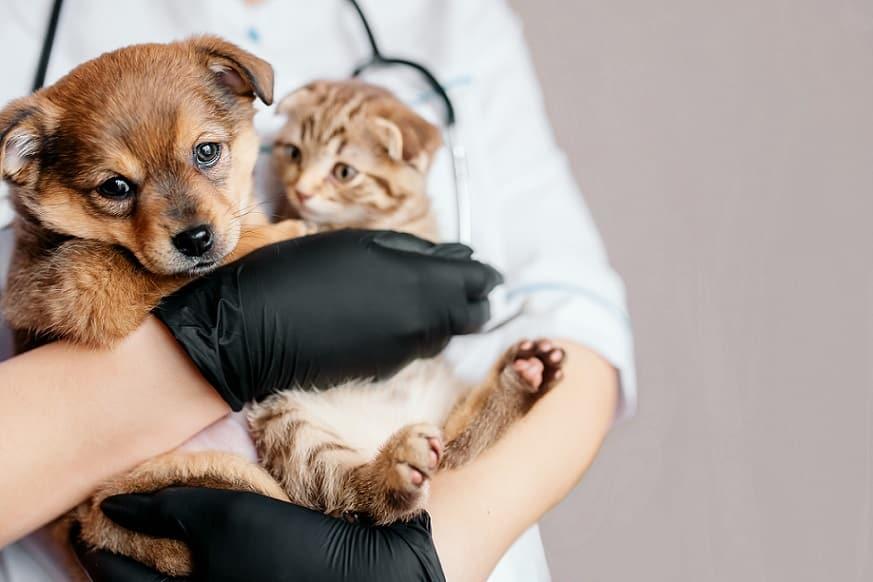 ידיים עם כפפות שחורות מחזיקות גורי כלב וחתול