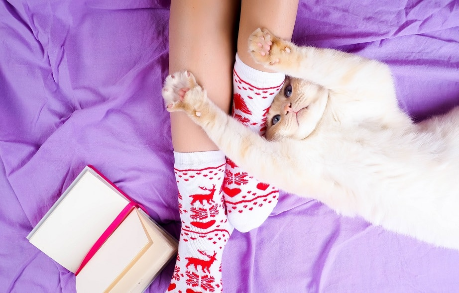 חתול מתמתח בנוחות על המיטה ליד הרגליים של הבעלים שלו